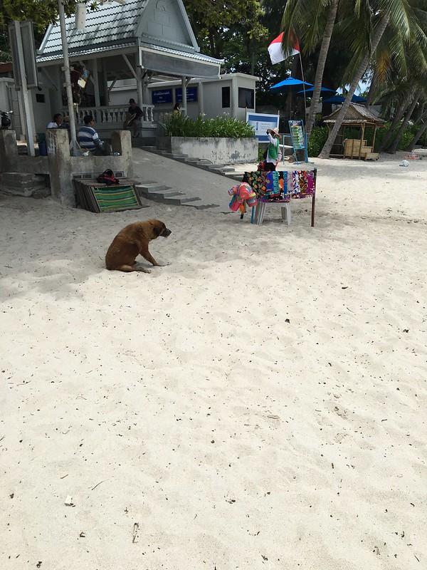 チャウエンビーチ コサムイ chaweng beach koh samui