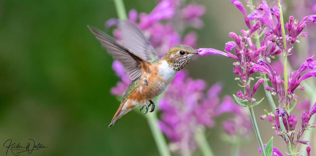 Little Wonders Of Nature
