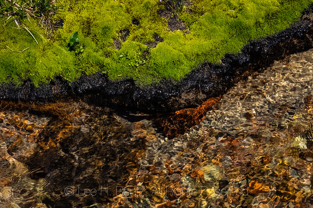 Mosses along Cispus River in the Goat Rocks Wilderness