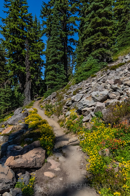 Pacific Crest Trail in the Goat Rocks Wilderness