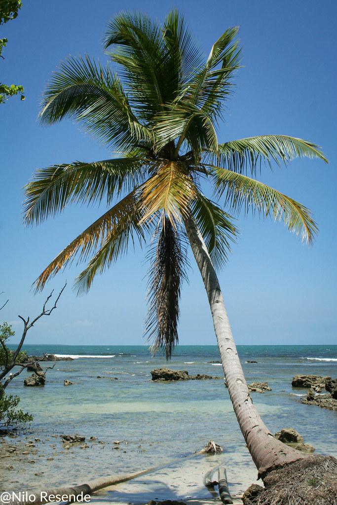 Palmeira ao mar