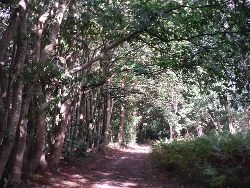 Walter's Plantation, Stopham SWC Walk 39 - Amberley to Pulborough