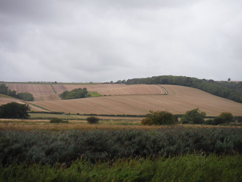 South Downs Way and Coombe Wood SWC Walk 39 - Amberley to Pulborough