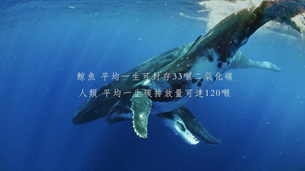 擷取自影片,來源:首獎作品《鯨嘆之歌》(黃維婷、吳添運)。