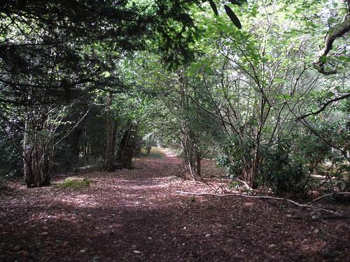 The Warren, Sutton End SWC Walk 39 - Amberley to Pulborough