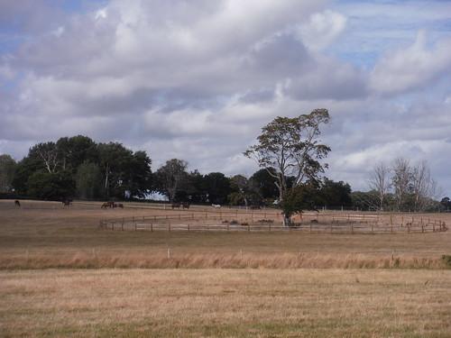 Tree and Horses, Burton Park SWC Walk 39 - Amberley to Pulborough