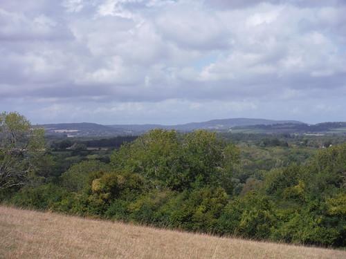 Black Down from Barlavington Down SWC Walk 39 - Amberley to Pulborough