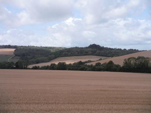 Fieldscape near Farm Hill SWC Walk 39 - Amberley to Pulborough