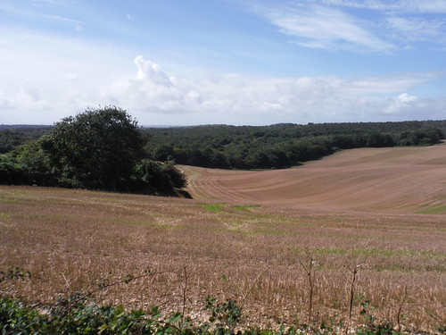 Fieldscape off SDW near Coombe Wood SWC Walk 39 - Amberley to Pulborough