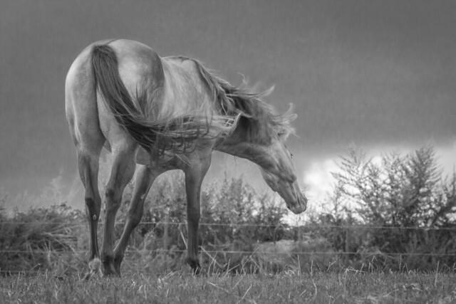 Horse in Black & White