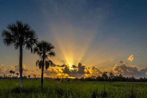 sun sunrise dawn morning rays beams sunbeams clouds cloudy sky weather trees palms palmtrees grass marsh nature mothernature landscape outdoors pineglades naturalarea pinegladesnaturalarea jupiter palmbeachcounty florida usa