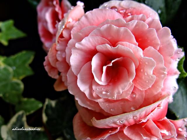 Bella flor 014