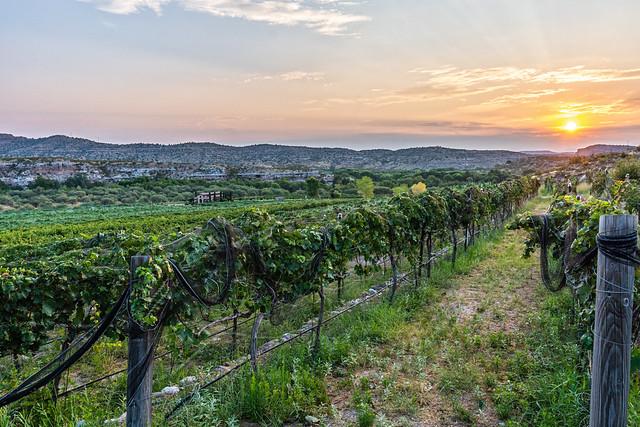 DSC04782-E - Sunrise Over The Vineyard