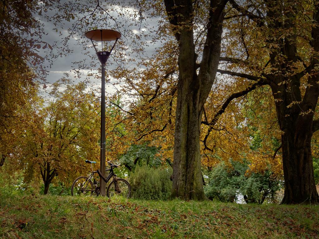 En août voici déjà les premières couleurs de l'automne... 50264249297_9aef97a25b_b