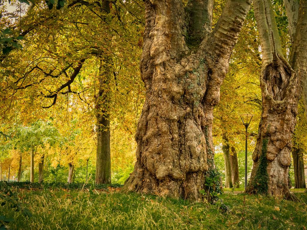 Les premières couleurs de l'automne... La suite 50264250802_9d99299d00_b