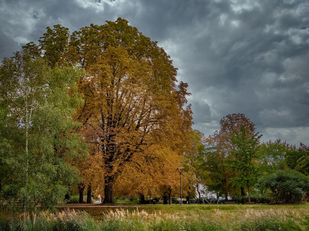 En août voici déjà les premières couleurs de l'automne... 50264251702_8332a1b986_b