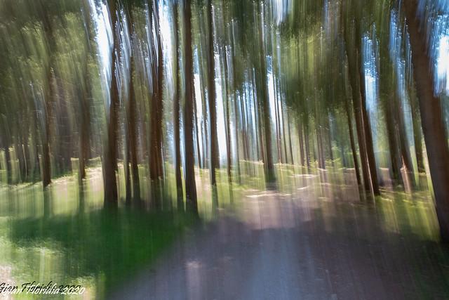 Correndo nel bosco