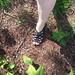 20180907 0951 - Claire's FFS - 10 - day 4 - Carolyn's walk - Carolyn touches Europe - (by Carolyn) - 47510915