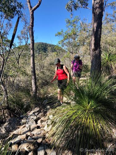 australia beerburrum glasshousemountains qld queensland sunshinecoast yulyanmantrack bushwalk bushwalking mtbeerburrum grasstree xanthorrhoea hiking bushwalkers track rocky trail