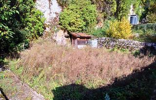 Jardin en friche sous le Mont Orgier