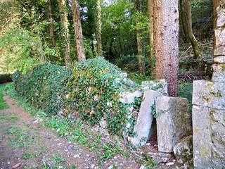 Jardin en friche sous les ruines du château d'Orgelet