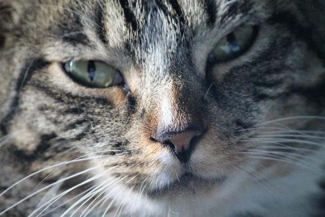 Face of a Fuzzle Wuzzin