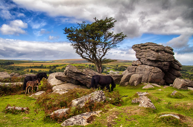 Ponies at Emsworthy Rocks
