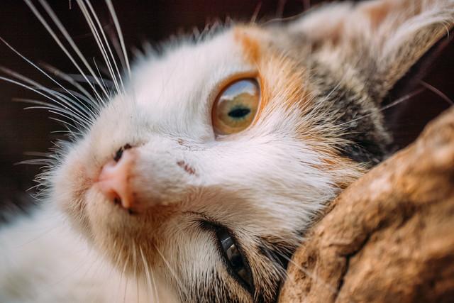 Close-up of a feral cat