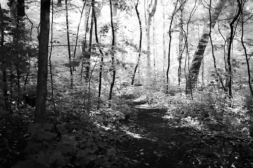 forest trees woods leaves summer paths trail pathway light monochrome bw blackandwhite wisconsin landscape nature