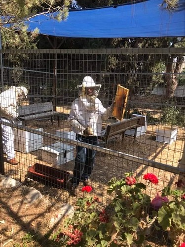 The Kaykab Sustainable and Practical Bee Keeping Project