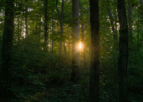 sunset sunlight rays sunstar lensflare mist forest woods summer august 2019 pennsylvania gettysburg pa outside outdoors nature mysterious moody evening night dusk lowlight trees trunks bark leaves bokeh sony alpha a7rii ilce7rm2 tamron2875 zoom lens fullframe shooter landscape photography handheld