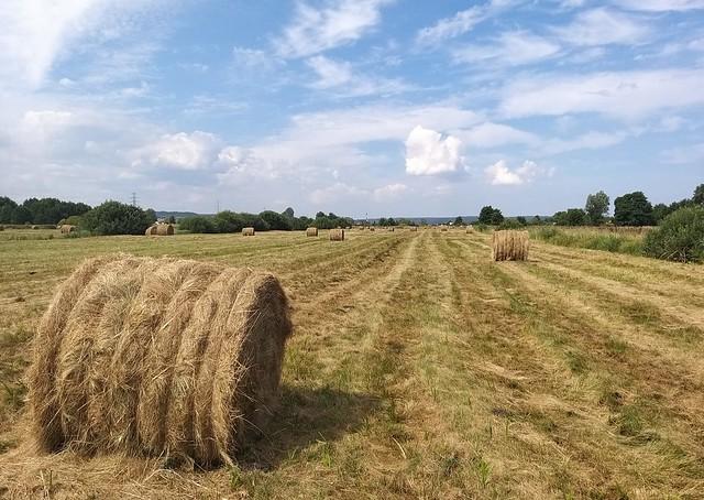 haymaking 🌻