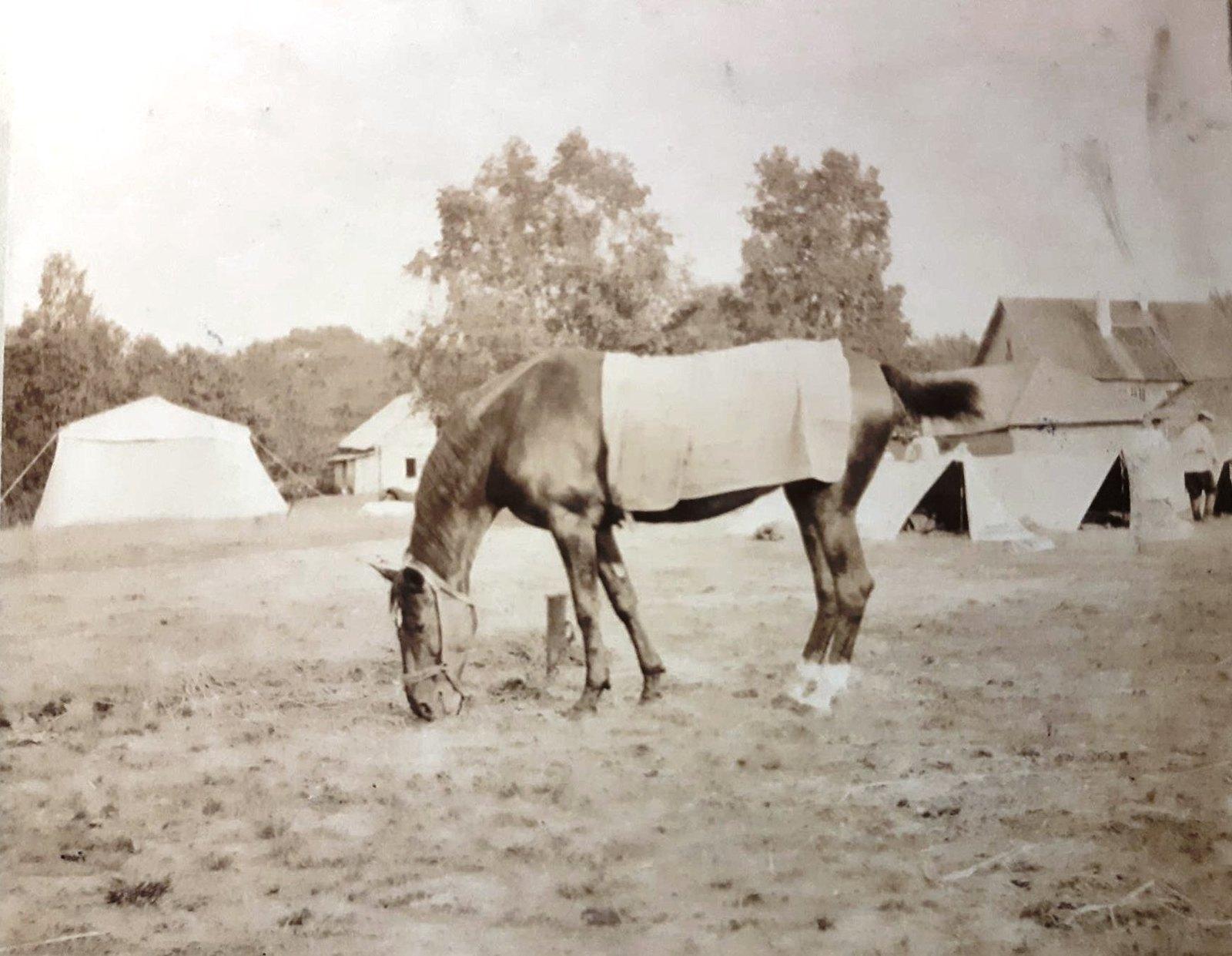 10. Лошадь на фоне палаток