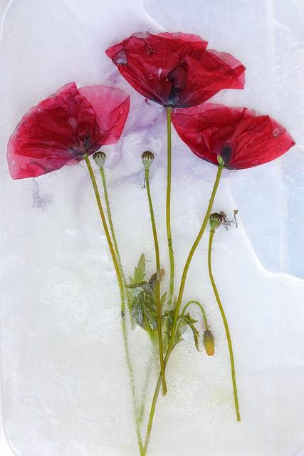 The frozen beauty