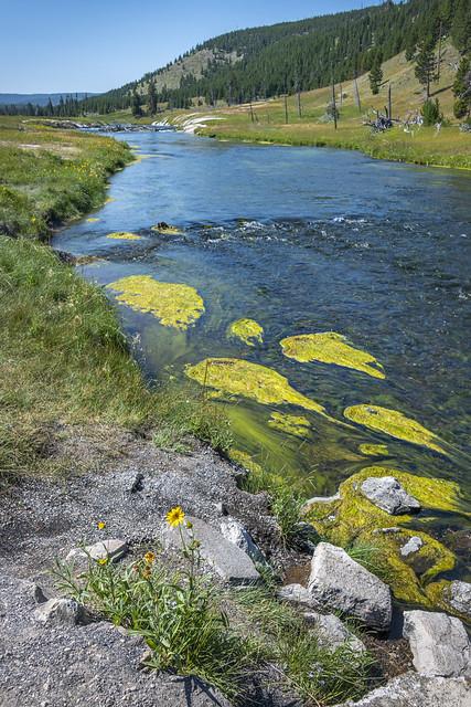 2020 - Aug - Wyoming - 1296