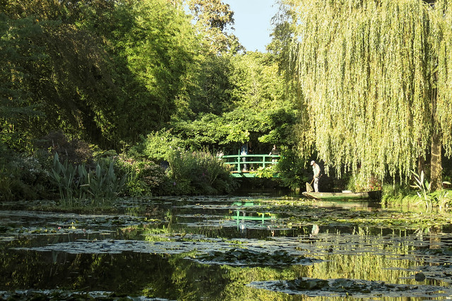 Willow by the Lily Pond