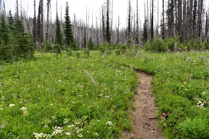 Hiking the Riley Camp Trail