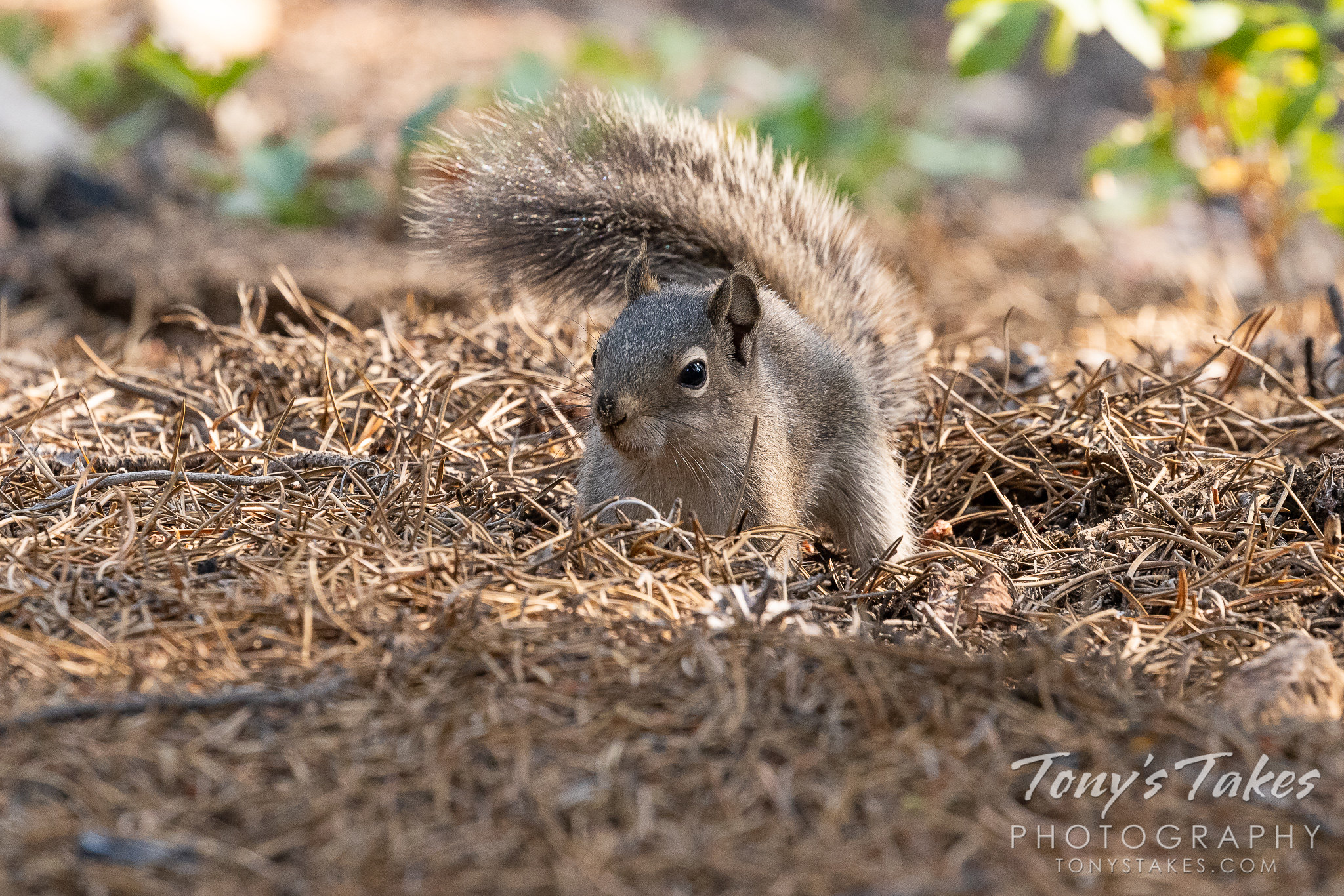 Squirrel finds a nut
