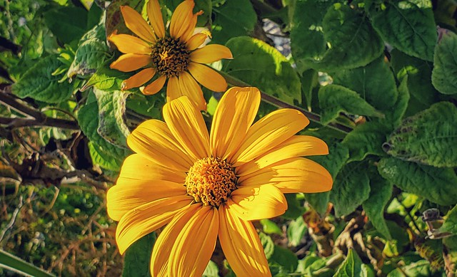 Lovely yellow.. ♥  Botanical gardens #fortworth Texas USA