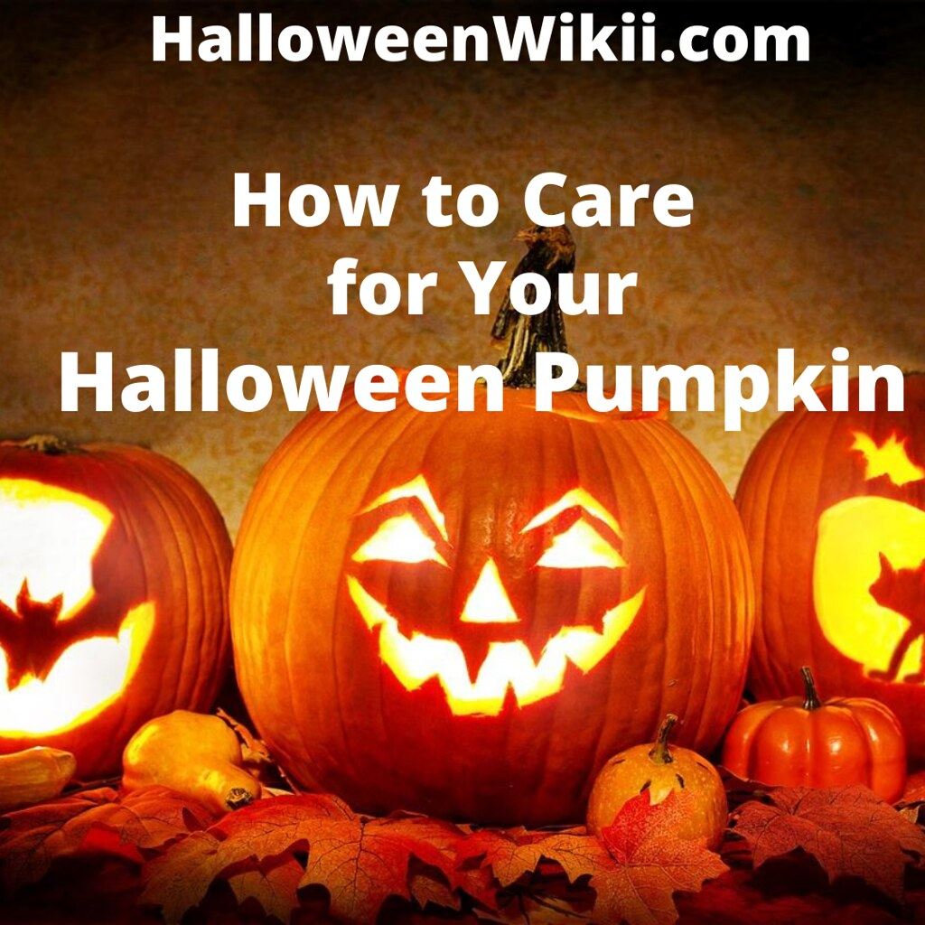 How to Care for Your Halloween Pumpkin