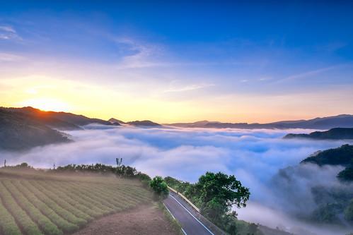 taiwan newtaipeicity pinglin teagarden cloud cloudspace sky sunrise outdoors mountain 台灣 新北市 坪林區 仙公廟 雲海 茶園 晨曦 日出