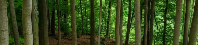 Escenas del bosque, Schumann