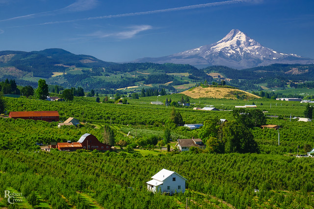Summertime in the Hood River Valley