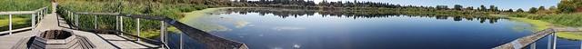 Swan Lake Panorama