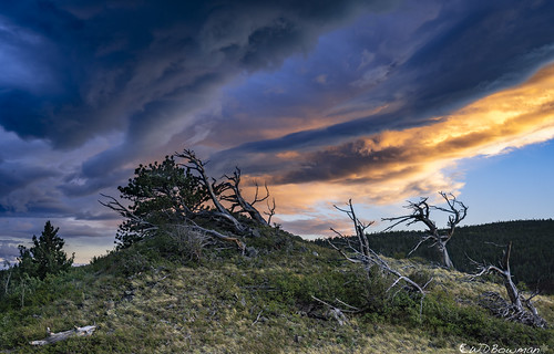 sunset grassytop wavecloud windsculptedtrees limberpines colorado rockymountains