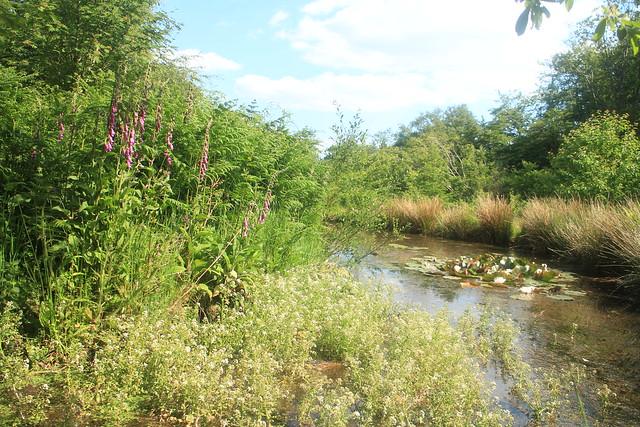 Woodland Lily Pond