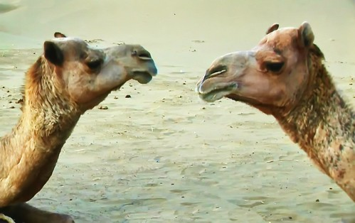 india rajasthan jaisalmer thardesert safari asienmanvideography