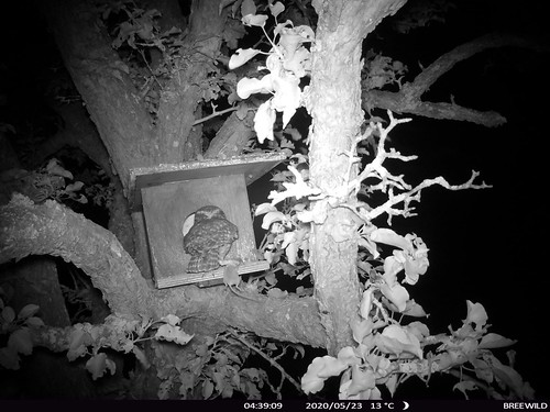 Blekenbrink ouder met muis