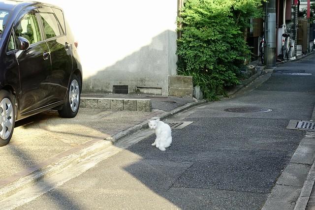 Today's Cat@2020ー08ー26