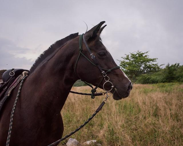 20200814 Sods Sunset Horses_39